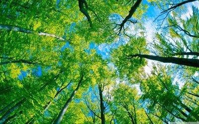 forest_sky_vie.jpg