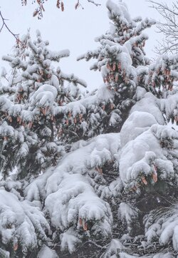 Природа в Парке Победы Белореченска (5).jpg