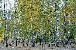 Деревья в парке (1).JPG