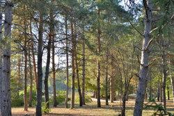 Деревья в парке (2).JPG