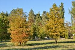 Деревья в парке (3).JPG