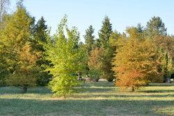 Деревья в парке (4).JPG