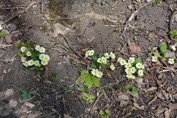 Цветы (1).jpg