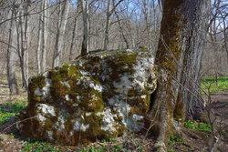 Дерево и камень.jpg
