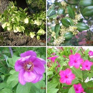 Цветы, природа, вдохновенье ...