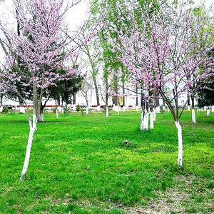 Цветущие деревца в Парке Победы